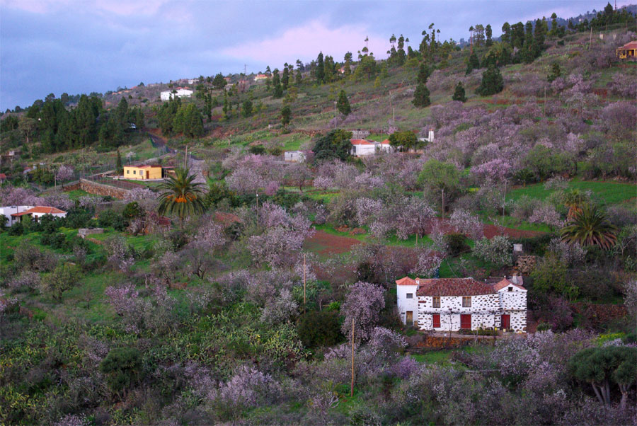 Almond blossom from the Mirador (viewpoint) de Millflores in Puntagorda, La Palma island