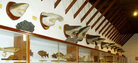 Stuffed sharks and other fish, Island Museum, Santa Cruz de la Palma