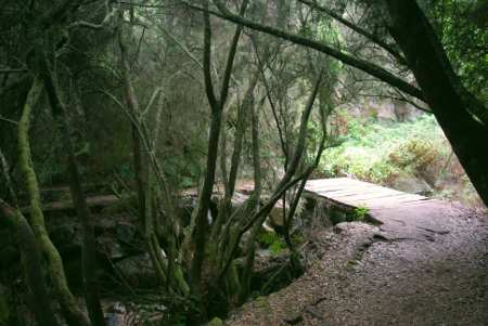The woods at La Zarzita, Garafia, La Palma