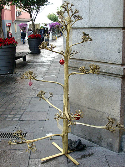 A sprayed agave stalk, decorated as a christmas tree