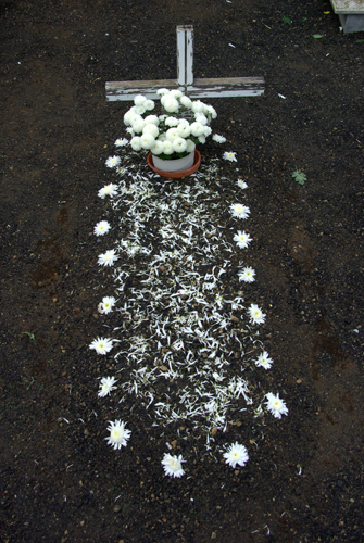 A grave decorated with white dahlias for All Saint's Day