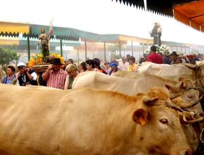 The procession to bless the animals, San Antonio del Monte fair, Garafía