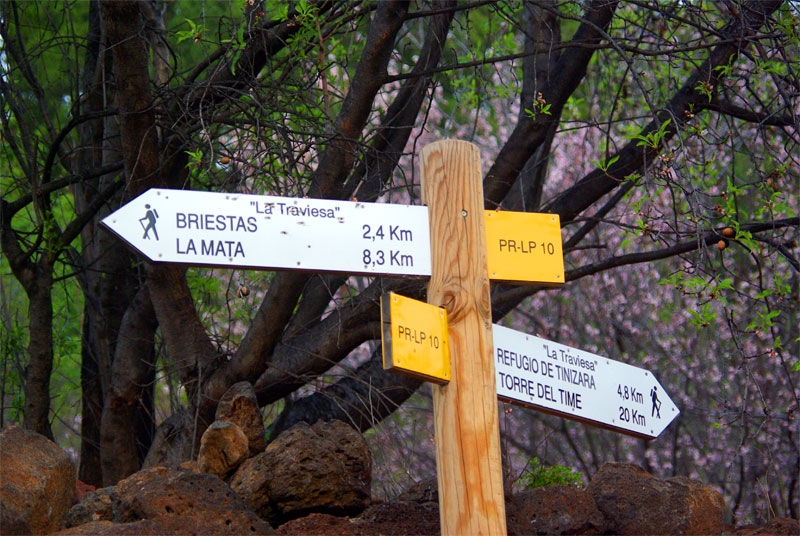 Sign for a hiking trail wit almond blossom, Garafia, La Palma island