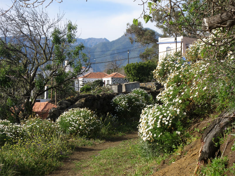 los llanos de aridane single catholic girls Located 14 km from santa cruz de la palma, casa morrison offers accommodation in los llanos de aridane the unit is 8 km from puerto naos free wifi is available throughout the property.
