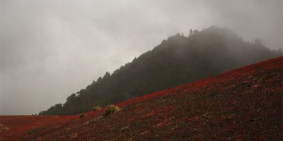 The volcanic gravel turnin red at Llano de los Jables above El Paso, La Palma island