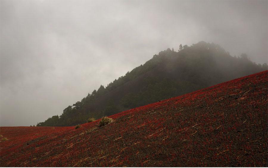 The volcanic gravel turning red at Llano de los Jables above El Paso, La Palma island